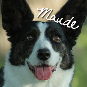 Maude from Ciao! Bow Wow